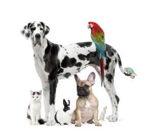 Pet sector